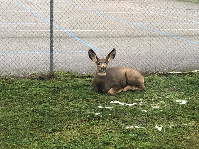 Chiropractic Vernon BC Deer